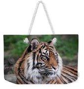 Sumatran Tigress Portrait  Weekender Tote Bag