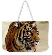 Tiger Pacing Weekender Tote Bag