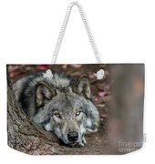 Timber Wolf Picture - Tw286 Weekender Tote Bag