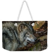 Timber Wolf Picture - Tw417 Weekender Tote Bag