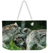 Timber Wolf Picture - Tw70 Weekender Tote Bag