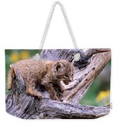 Tiny Bobcat Kitten Weekender Tote Bag