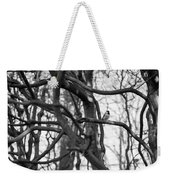 Tit Bird Perching On Tree Weekender Tote Bag
