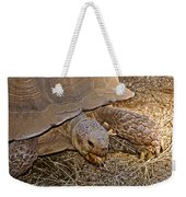 Tortoise Eating Lunch In Living Desert Zoo And Gardens In Palm Desert-california  Weekender Tote Bag