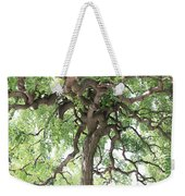 Tree At Ming Tombs Weekender Tote Bag