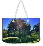 Tree Bathed In Sun Weekender Tote Bag