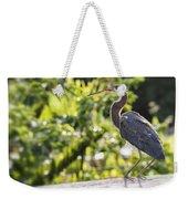Tri-colored Heron Fledgling  Weekender Tote Bag