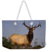 Tule Elk - Tomales Point Weekender Tote Bag