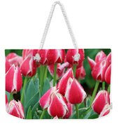 Tulips - Candy Apple Delight 02 Weekender Tote Bag