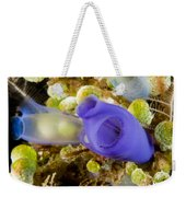 Tunicates Didemnum Molle, Also Known Weekender Tote Bag