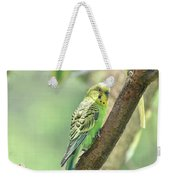 Two Beautiful Yellow Parakeets In A Tree Weekender Tote Bag