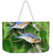 Two Eastern Bluebirds Weekender Tote Bag