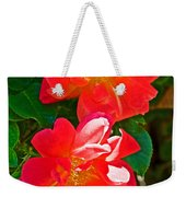 Two Joseph's Coat Roses At Pilgrim Place In Claremont-california Weekender Tote Bag
