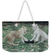 Two Lion Cubs Playing Weekender Tote Bag
