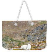 Two Mountain Goats On Mount Bierstadt In The Arapahoe National Fores Weekender Tote Bag