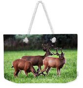 Velvet Antlers In The Sunset Weekender Tote Bag