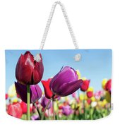 Velvet Red And Purple Tulip Flowers Closeup Weekender Tote Bag