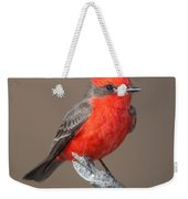 Vermilion Flycatcher Weekender Tote Bag by Clarence Holmes
