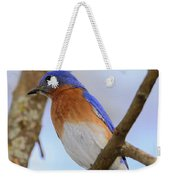 Very Bright Young Eastern Bluebird Perched On A Branch Colorful Weekender Tote Bag