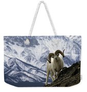 Very Large Dall Sheep Ram On The Grassy Weekender Tote Bag
