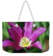 Very Pretty Dark Pink Blooming Tulip With Yellow In The Center Weekender Tote Bag