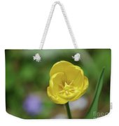 Very Pretty Flowering Yellow Tulip Blooming In A Garden Weekender Tote Bag