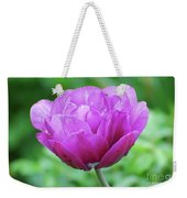 Very Pretty Lavender And Pink Tulip Blossom Flowering Weekender Tote Bag