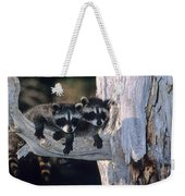 Very Young Raccoons Weekender Tote Bag