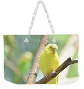Vibrant Yellow Budgie Parakeet In The Summer Weekender Tote Bag