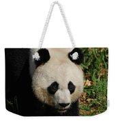 Waddling Giant Panda Bear In A Grass Field Weekender Tote Bag