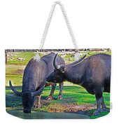 Watching 2 Water Buffalos 1 Water Buffalo Watching Me Weekender Tote Bag