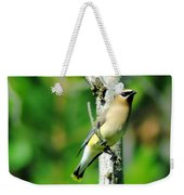 Wax Wing In A Small Branch  Weekender Tote Bag