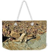 Whistle Pig Of The Rockies Weekender Tote Bag