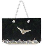 White Ibis In Flight Over Flock Weekender Tote Bag