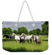 White Lipizzaner Mares Horse Breed With Dark Foals Grazing In A  Weekender Tote Bag