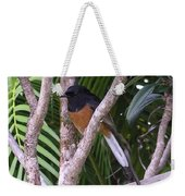 White Rumped Shama Weekender Tote Bag