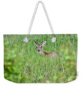 White-tailed Deer Bedded Down In Tall Grass Weekender Tote Bag
