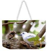 White Terns Koa And Parent...bird Love Weekender Tote Bag