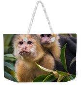 White-throated Capuchin Monkeys Cebus Weekender Tote Bag