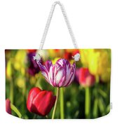 White Tulip Flower With Pink Stripes Weekender Tote Bag