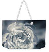white winter rose wilting in a blue gloomy field art print. Black Bedroom Furniture Sets. Home Design Ideas