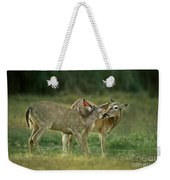 Whitetail Deer Share An Initmate Moment Texas Wildlife Weekender Tote Bag