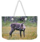 Wild Finnish Forest Reindeer 24 Weekender Tote Bag