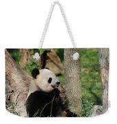Wild Giant Panda Bear Eating Bamboo Shoots Weekender Tote Bag