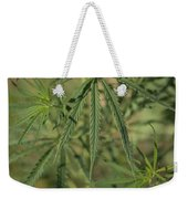 Wild Marijuana Leaves Near Burwell, Ne Weekender Tote Bag