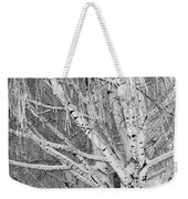 Icy Winter Birch Tree  Weekender Tote Bag