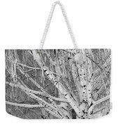 Icy Winter Birch Tree  Weekender Tote Bag