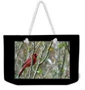 Winter Cardinal Sits On Tree Branch Weekender Tote Bag
