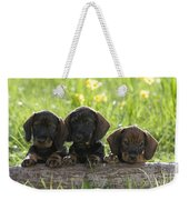 Wire-haired Dachshund Puppies Weekender Tote Bag
