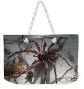 Wolf Spider Sunlight Weekender Tote Bag